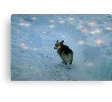 Luna in the wonderland Canvas Print