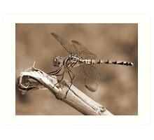 Dragon Fly - Sepia Art Print
