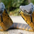Tasmanian Tiger Snakes by Thow's Photography