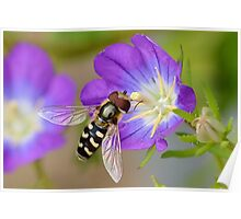 Hoverfly 2 Poster