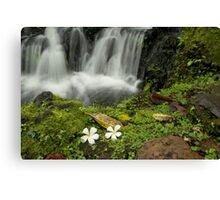 Peaceful waterfall Canvas Print