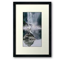 Swan Song Framed Print