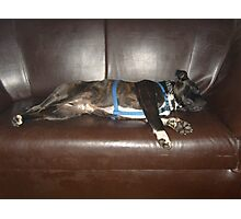 Diesel stretched out - it's very tyring being a gorgeous cutie! Photographic Print