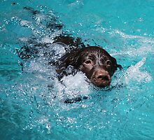 Dog Paddle by Carol Barona