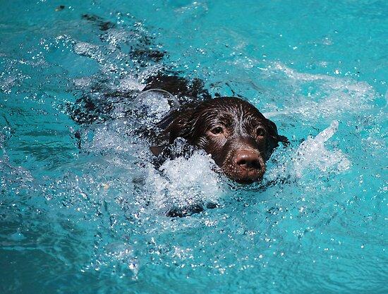 Dog Paddle by Carol Barona