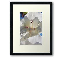 Shining... Framed Print