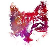 Purple kitty Photographic Print