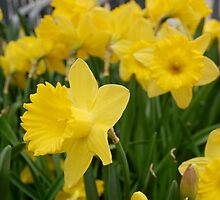 mellow yellow by greenjewels77
