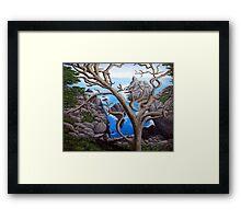 Monterey Cypress Framed Print