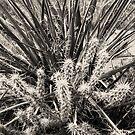 Yucca & Cactus No. 2 by Benjamin Padgett