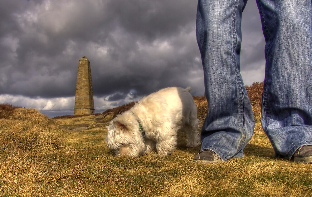 Walking the Dog by Stephen Paylor