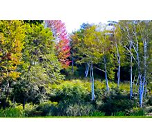 The Birches Photographic Print