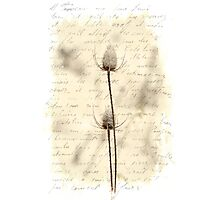 Words and Weeds - Teasels and Snow Photographic Print