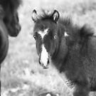 Teeny weeny horses by Michelle Dry