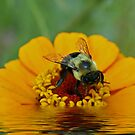 Bee Art Challenge by BigD