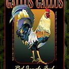 Gallus Gallus International by seedmother