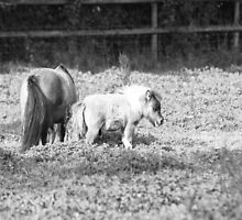 little horses by Michelle Dry