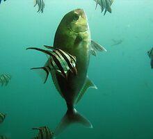 Samsonfish by Edjamen