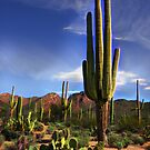 Desert Beauty by Barbara Manis