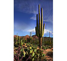Desert Beauty Photographic Print