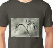 Tulip Poplar Empty Seed Heads - Black and White Unisex T-Shirt