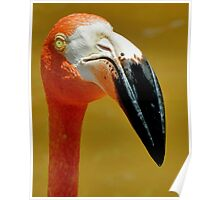 The Flamingo Poster
