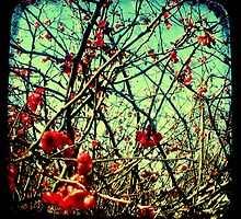 Blossom Frenzy - TTV by Kitsmumma