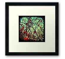 Blossom Frenzy - TTV Framed Print