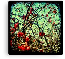 Blossom Frenzy - TTV Canvas Print