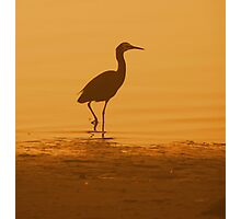Lonely Crane Photographic Print