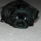 Puppy Look 2 by Steven Maynard