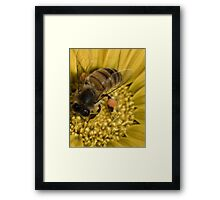 Oh what a buzz Framed Print