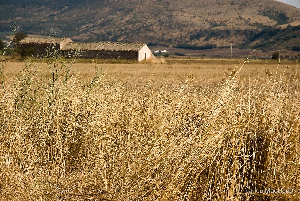 Puglia, Italy by Nando MacHado