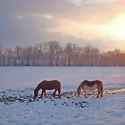 At Winter Pasture by tinmar