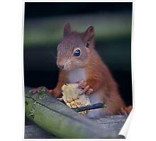 Squirrel Banquet Poster