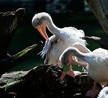 Pruning Pelicans by CherilynJoy
