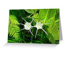 Spider Lilies - Prettier than the Name Suggests Greeting Card