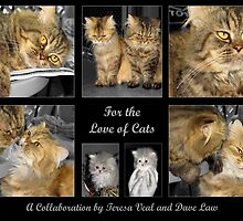 For the Love of Cats by Dave Law