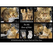 For the Love of Cats Photographic Print