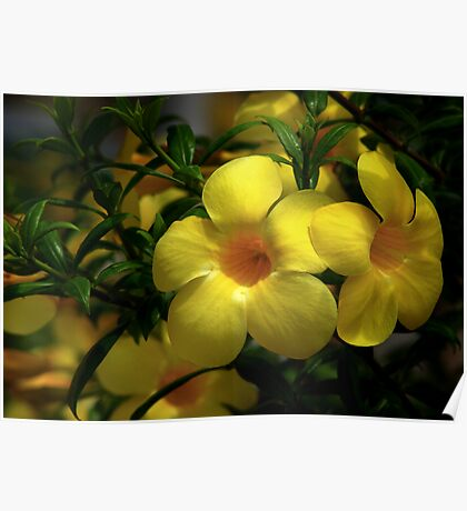 Yellow Bloom Poster