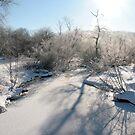 Glistening Snowy Morning by Geno Rugh