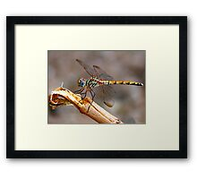 Dragon Fly - Colour Framed Print