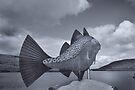 Voe Fish, Shetland by Richard Ion
