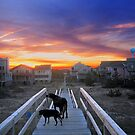 Sunset, Ocean Sands, Corolla, Outer Bank, North Carolina by fauselr