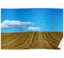 Hay field Flyers Poster