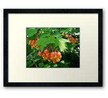 Berries Jubilee Framed Print