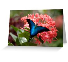 Ulysis Blue,  Greeting Card
