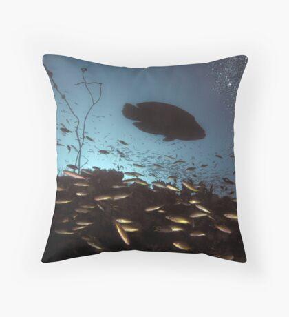Maori Wrasse Silhouette  Throw Pillow