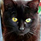 Blackie aka. Crazy Black Cat by MaeBelle