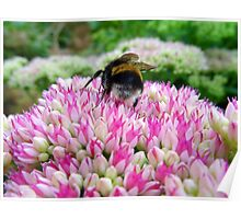 """UK: """"The Bumblebee No 2"""", North Yorkshire Poster"""